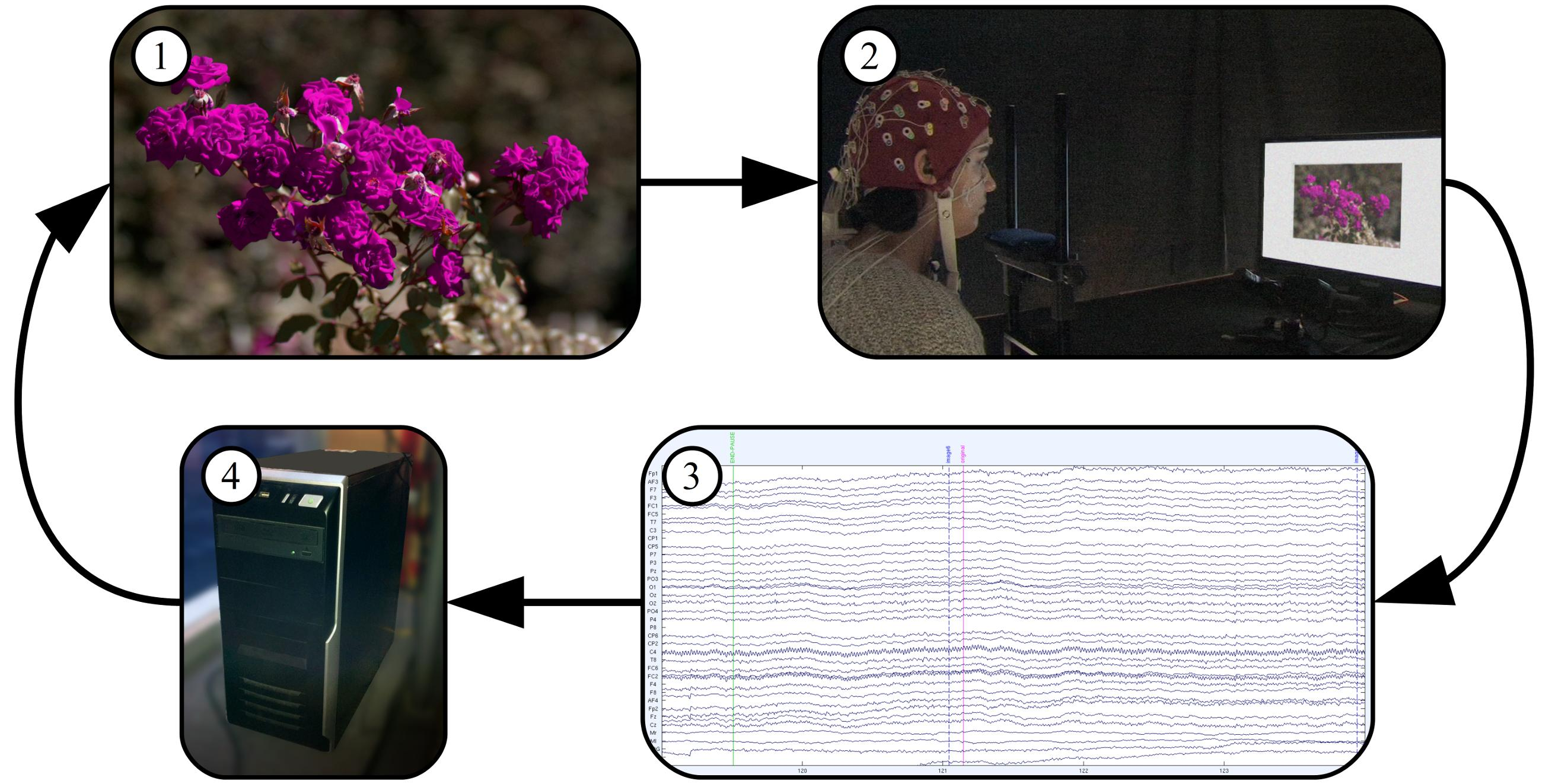 ElectroEncephaloGraphics: Making Waves in Computer Graphics Research